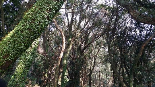 환상숲의 원시림.ⓒ조남대