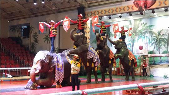 점보빌리지에서 코끼리가 사람을 태우고 공연하는 모습.ⓒ조남대